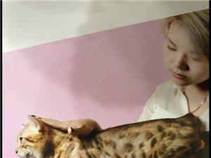 豹猫只要《999》 猫咪全场双十一活动,一年仅有一次哦