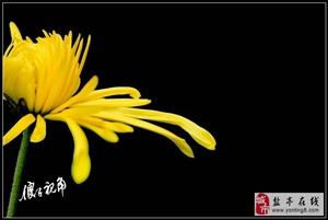【傻子视角】赏菊