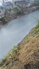 每到下雨无良厂家就给河水里边排放污水