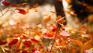 建平最美的秋景都藏在校园里