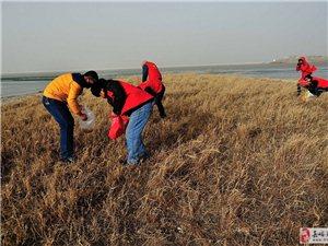 保护候鸟,志愿者在行动