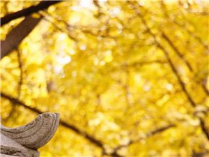 慈恩寺的晚秋