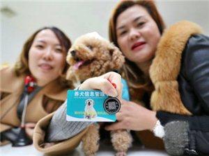 """滁城发出首张犬只""""身份证"""",犬只外出必须佩戴"""