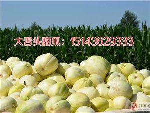 大舌头香瓜种子