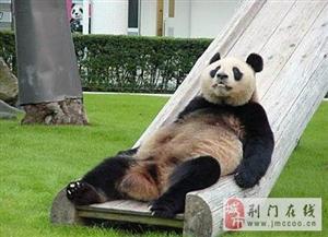 熊猫的日常生活图片,吃喝玩乐,尽享人生繁华