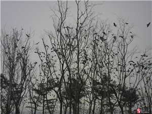 齐河~黄河水乡国家湿地公园