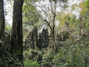 东安县发现原始次生林,珍贵稀奇的古树罕见