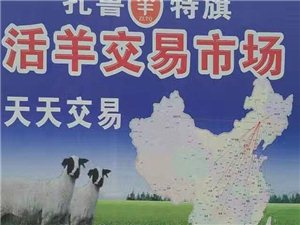扎�特旗活羊交易市�龃罅渴召�大山羊羯子