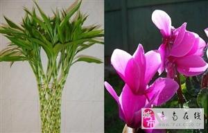 家居植物风水:植物摆放风水禁忌