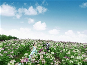 【双十二?年末钜惠】做醉蝶花间最美的恋人