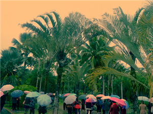 椰子树下的雨伞