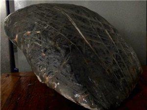 奇石的最高境界-禅石,灵璧石象形石【金蟾】。