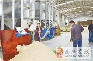 """""""艾草之乡""""南阳:小艾草撑起大产业"""