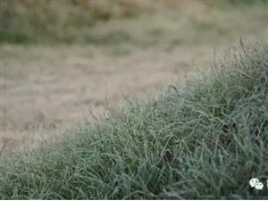 【箐箐庄园】霜花下的美