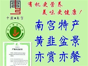南宫特产黄韭盆景年货有机蔬菜农业部认证无公害蔬菜韭菜阳台蔬菜