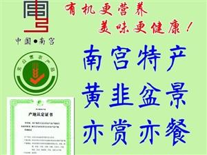 南宫特产无公害黄韭纯绿色有机蔬菜