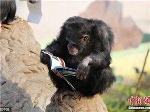"""黑猩猩都在看��""""充�""""你�好意思不努力��"""