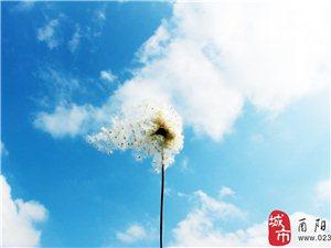 冬天花田是一��被�z影�酆谜叨己雎缘牡胤剑�但�{天白云下�是�e有一番味道。