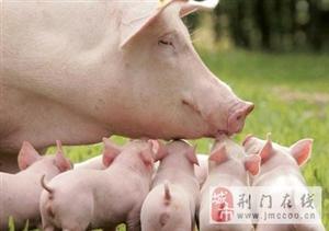 淘气的动物图片,人类也有被欺负的时候