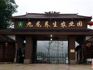 凤冈九龙养生农业园祝大家元旦快乐