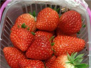 【武功生活】武功县苏坊现代农业园区新鲜圣女果奶油草莓上市啦!!!
