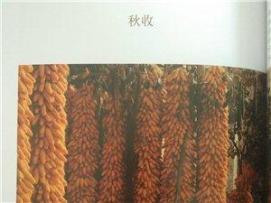 【�D志�B�d】《武功印�E》第八章 民�g�r事 第2-4小�