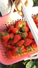 又到草莓来到时