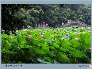 2017富顺县摄影家协会第十四届迎春展