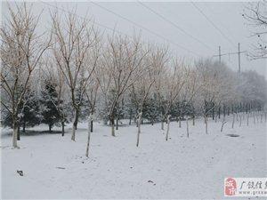新春第一场大雪