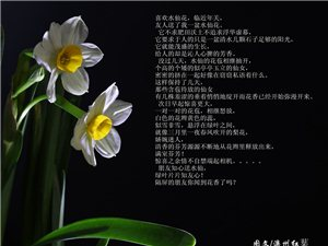 �R�q水仙花
