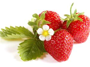 对肝脏有益的水果