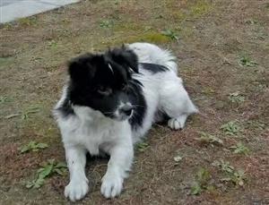 寻找走丢的小狗,如能协助找到,给予200元新年红包。