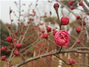 早春・鸣犊泉公园