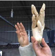 """又来一个稀罕事!萝卜长出五个""""手指"""""""