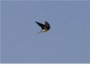 张先军:燕子飞回来了