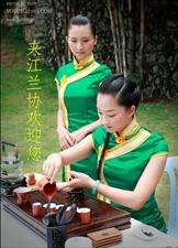 温馨提示:明天(2月15日)就是夹江春季兰花交易会了哦!!
