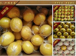 正宗四川安岳柠檬