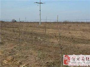 杨红亮――养殖大户华丽转身林业精英 8000亩荒地的植树人