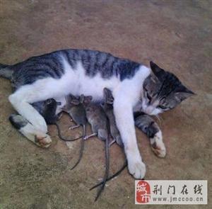 窥视动物们的情趣生活图片,看看又掉快肉