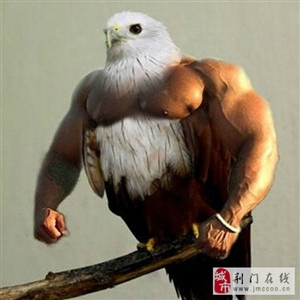 恶搞鸟儿的ps大师级作品,如果鸟儿的翅膀变成了胳膊,第一季