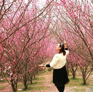 梅花园里抓拍