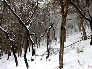 华池县2017年的第一场春雪!下的这叫一个认真!美翻了
