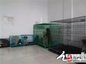 澳门龙虎斗网站有了流浪狗收容所!不再让它们无家可归……