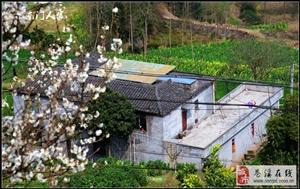 【苍溪】春到乡村菜花黄【图】