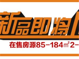 微景观DIY多肉手工季里的王牌担当!【在售资讯85-184�O2-4房销