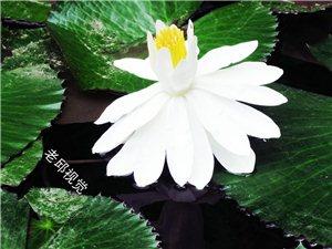 [原创]春意盎然花如画