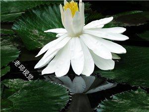 [原��]春意盎然花如��