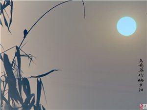 鸟影翠竹映夕阳