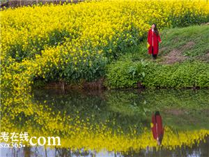 珠嘉镇棚村油菜花――你最应该去看看的地方