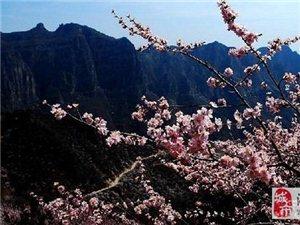 3月18日只需75元带你邂逅秋沟桃花林!一起共赏怒放的春天!【跟团游】